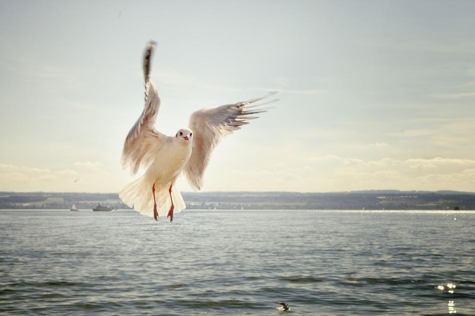 Сотрудники нижегородского госохотнадзора спасли чайку из браконьерских сетей