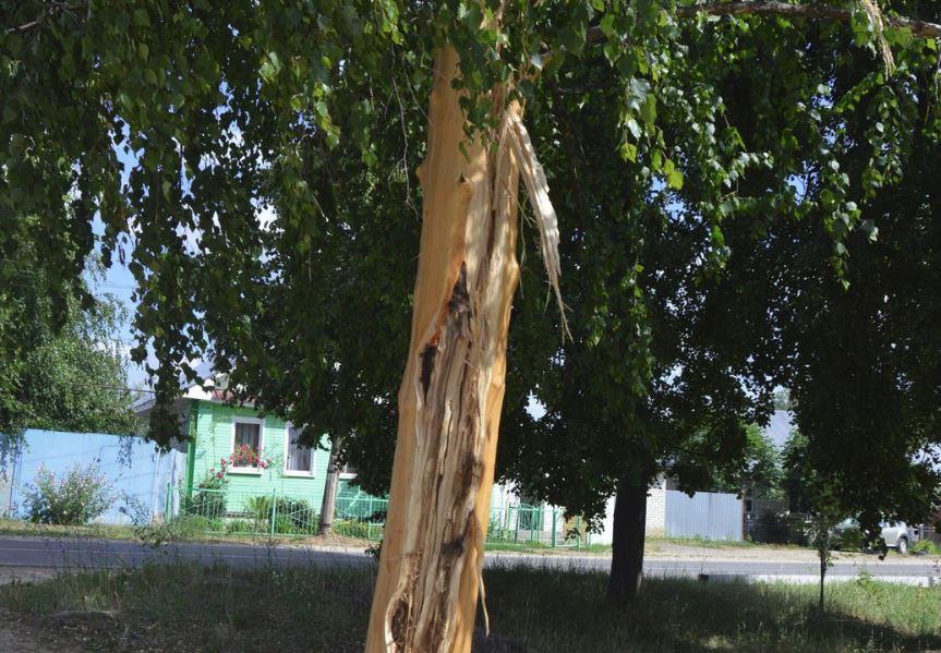 Как топор. Молния «разрубила» дерево в Выксе