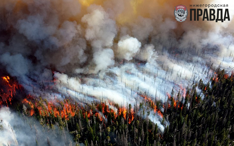 Высокая пожароопасность лесов сохраняется в Нижегородской области