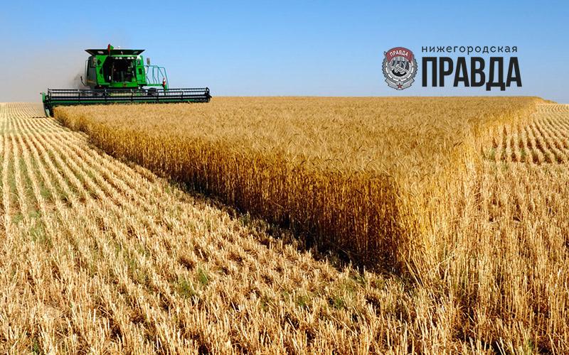В Нижегородской области завершена уборка зерновых культур
