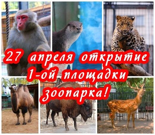 Зоопарк «Лимпопо» открывает после реконструкции площадку с леопардами и оленями