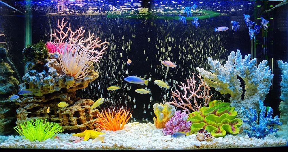 Супружеская ссора из-за аквариумных рыбок закончилась в полиции