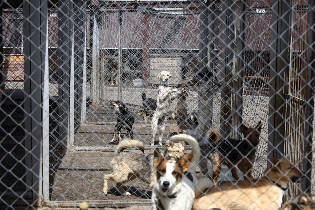Юные нижегородцы смогут помочь птицам и собакам во время акции #ЩедрыйВторник
